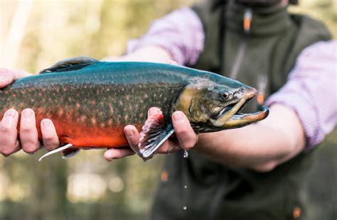 wann beißen welche fische unsere fische sind zu 100 bio michi s frische fische
