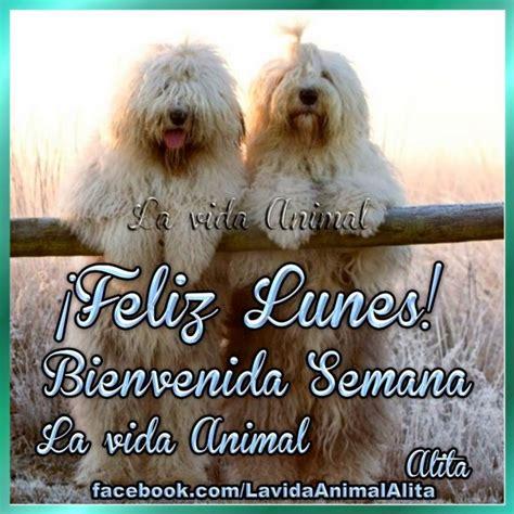 imagenes feliz domingo con animales hermosas im 225 genes de animales con frases de feliz lunes