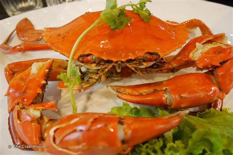 the crab house the crab house patong phuket com magazine