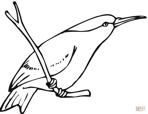 Hummingbird Coloring Page by Humming Birds Coloring Pages Www Pixshark Images