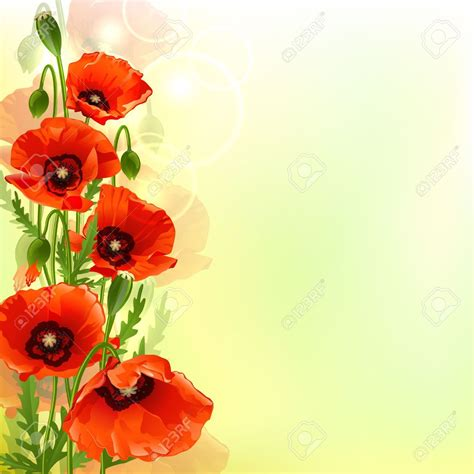 poppy background poppy background backgrounds layouts free printables