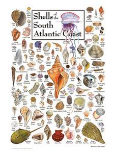 Fall Garden Nc - shells of the south atlantic coast puzzles jigsaw puzzles