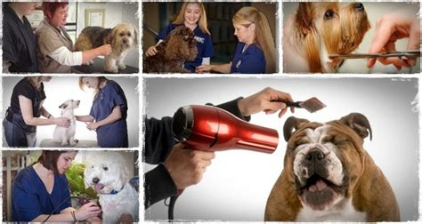 grooming school grooming school review can yvonne hoek s guide work