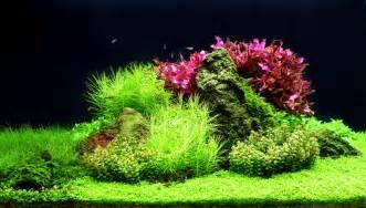 Aquascaping aquascaping landscape modelling under water aquascaping aquariums