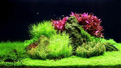 aquascape zonder co2 aquatic trends