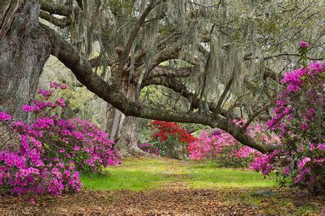magnolia gardens charleston sc charleston 2nd