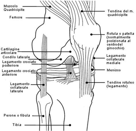 dolore parte interna ginocchio il ginocchio