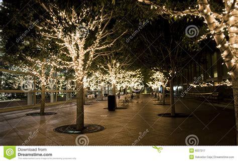 alberi di natale illuminati alberi illuminati fotografia stock libera da diritti