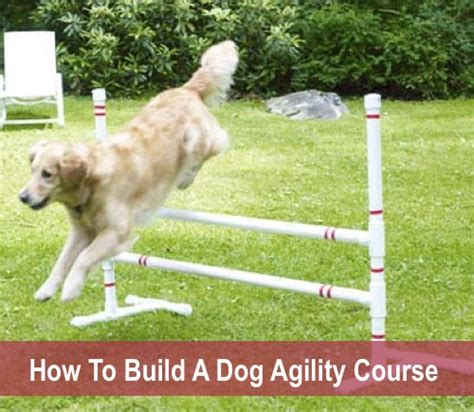 how to agility agility course www imgkid the image kid has it