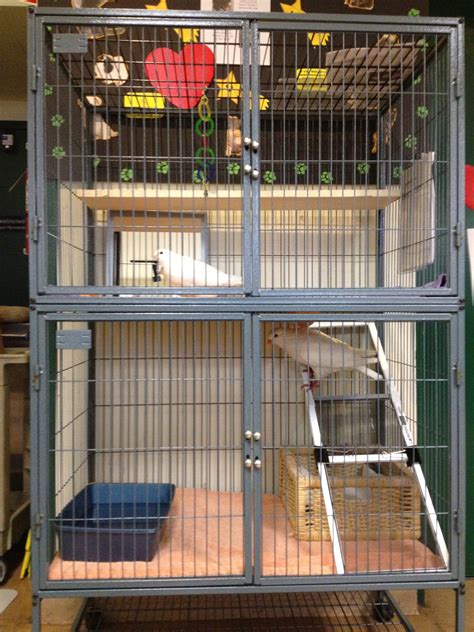 House Design Philippines Inside how to choose a cage for pigeons or doves