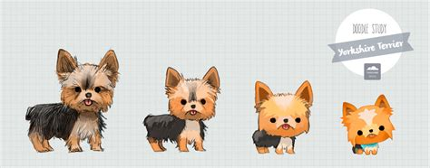 yorkie doodles pomeranian yorkie pictures inspirational pictures