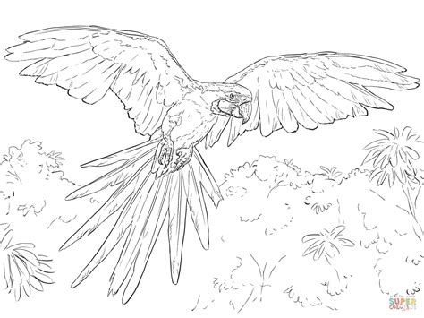 blue and yellow macaw coloring page free printable