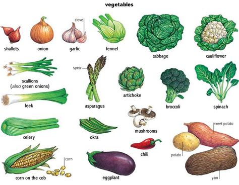 vegetables definition vegetable search minna printmaking