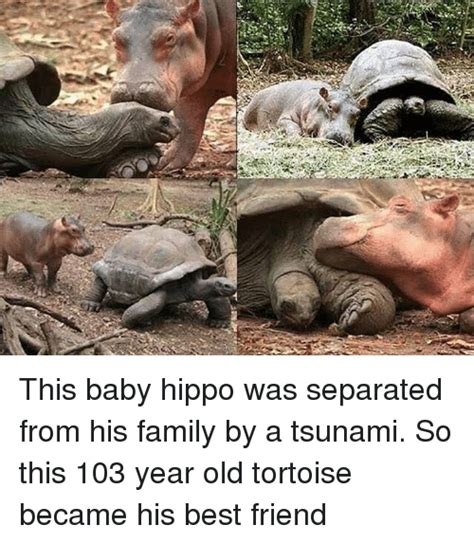 Baby Hippo Meme - 25 best memes about baby hippo baby hippo memes
