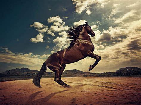 wallpapers hd fondos de pantalla de caballos varias nature wallpaper animales caballos darkgray burlywood