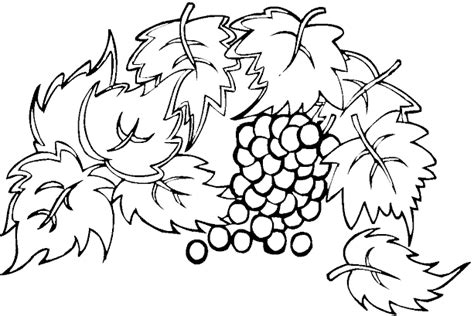 grape leaves coloring pages free grape leaf coloring pages