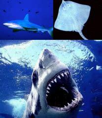 taxonomy kingdom animalia  flashcards quizlet