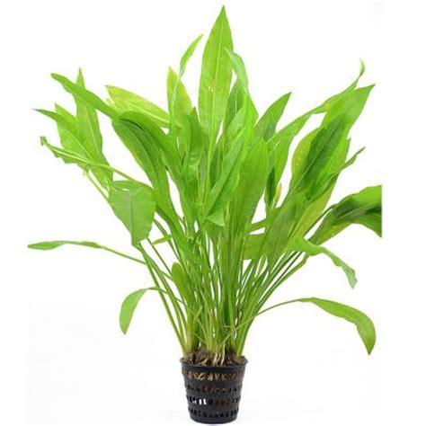 zooplants xl plantes d arri 232 re plan pour aquarium zooplus