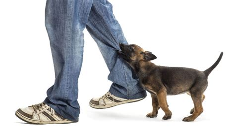 puppy sparks nv discuss your bite with a personal injury lawyer in sparks nv hub direct