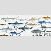 extinct-sharks-list
