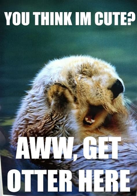 Cute Love Meme - super funny animal puns you think i m cute get otter here