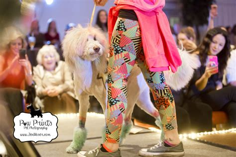 fort wayne spca dogs spca pawject runway 2018 187 paw prints pet photography