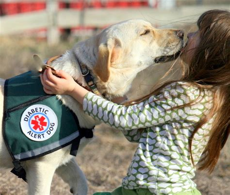 service dogs for epilepsy from helper monkeys to seizure detecting dogs there are service animals for everyone