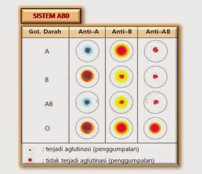 Kertas Golongan Darah contoh laporan praktikum uji golongan darah tugas sekolah