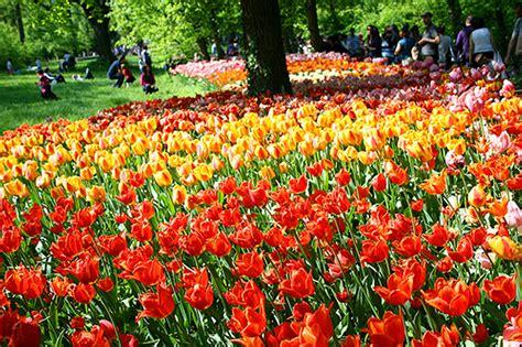 foto fiori coloratissimi un mare di fiori coloratissimi tiscali notizie