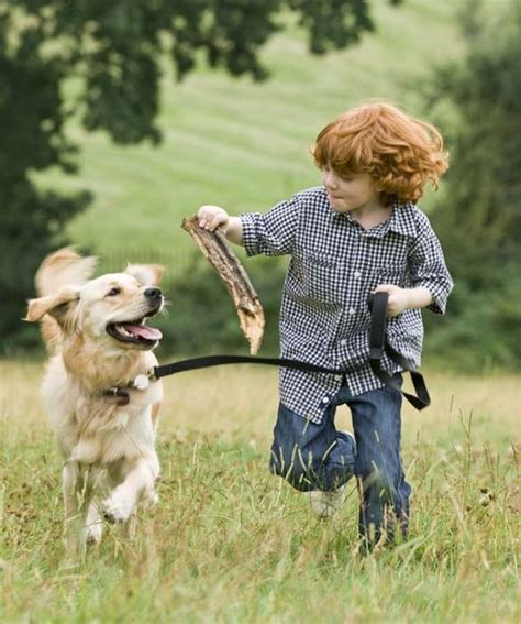 family friendly dogs top 10 family friendly dogs pets tips advice me