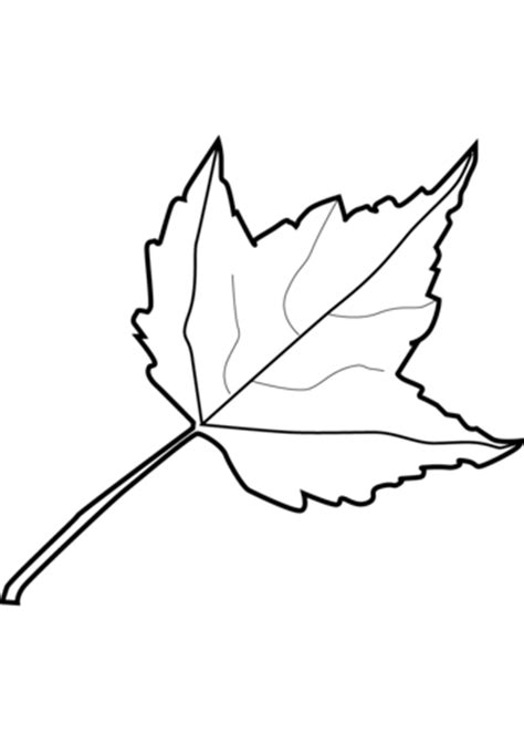 coloring page of a maple leaf maple leaf coloring page free printable coloring pages