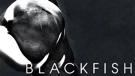 Tim Zimmermann: Co Author & Producer of Blackfish   UVM Bored