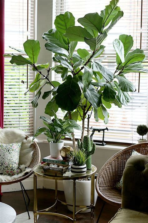style  home  plants bedroom plants