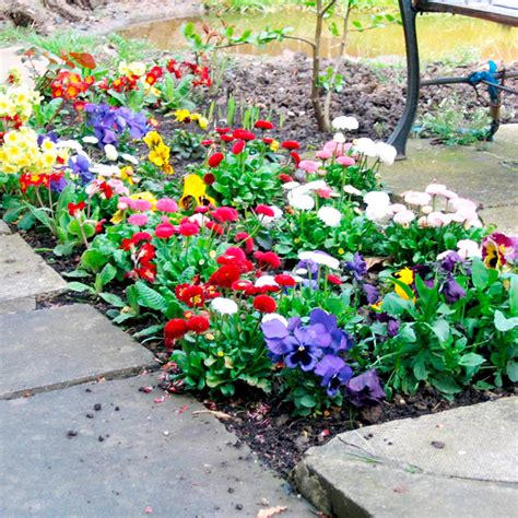 bedding plants extra value winter bedding 270 lucky dip bedding