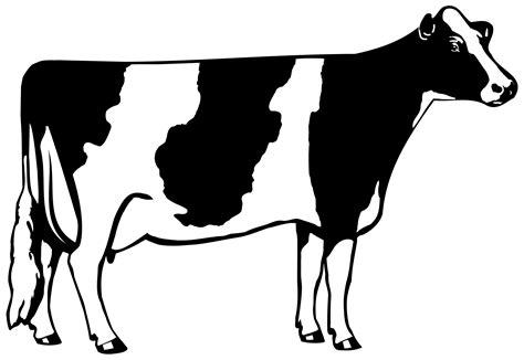 Bull Barn Genetics History Of The Holstein Breed