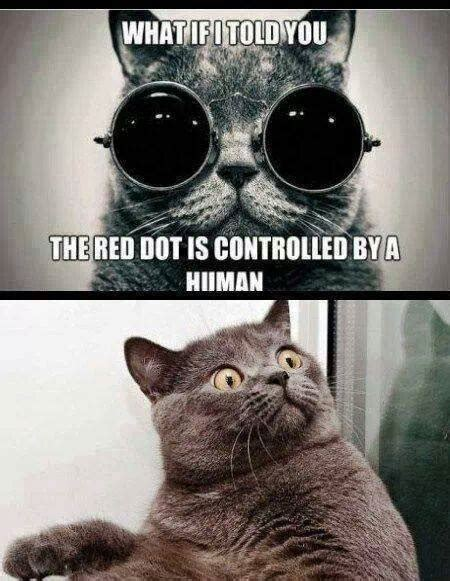 Morpheus Cat Meme - the red dot funny pictures quotes memes funny images