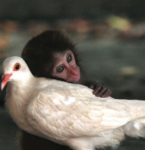 imagenes animales abrazados amistades incre 237 bles entre animales