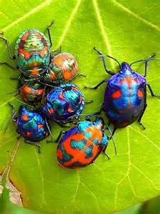 bed bug net 1000 images about beautiful beetles and bugs on pinterest beetle shield bugs and
