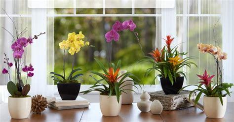 Jenis Pot Anggrek ini dia jenis dan ciri ciri bunga anggrek santai saja