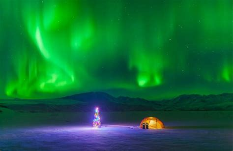 christmas tree tent under northern lights alaska