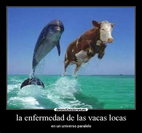 imagenes vacas locas la enfermedad de las vacas locas desmotivaciones