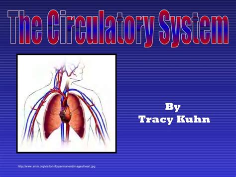 Circulatory System Slide Show Circulatory System Powerpoint