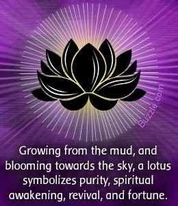 buddhism lotus flower meaning lotus flower meaning