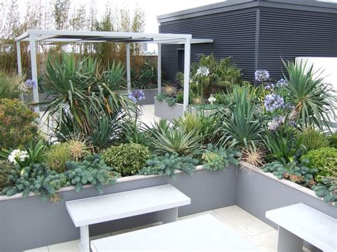 architectural plants for small gardens 28 images