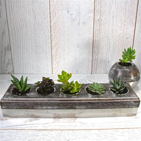 succulent holder steel and wood five succulent holder by london garden