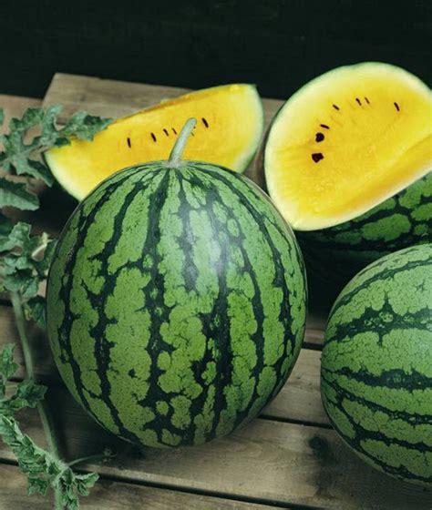 Bibit Buah Semangka benih semangka kuning