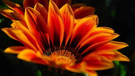 Orange Flowery orange flowers pictures