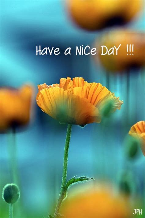 29 best images about Have A Nice Day on Pinterest   Good morning friday, You are awesome and