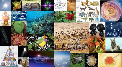 imagenes sobre ciencias naturales ciencias naturales colegiociencias