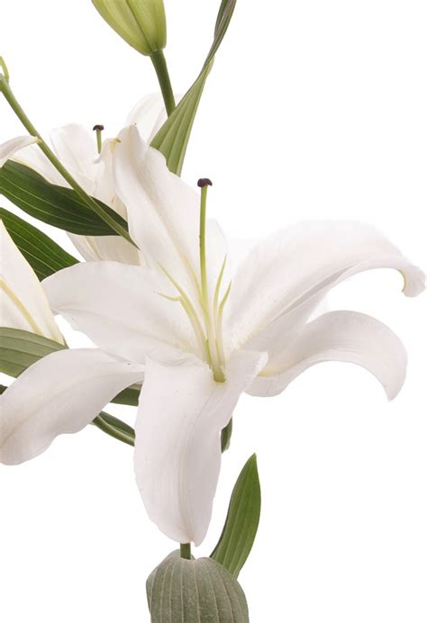 white oriental lily  bloom bouquet lilies gifts